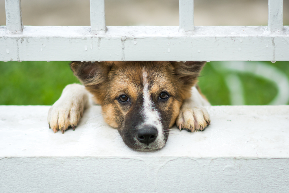 What You Need To Know About Animal Abuse And How To Report It